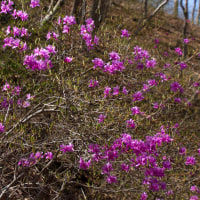 4月27日(木)  お山の上は 春春