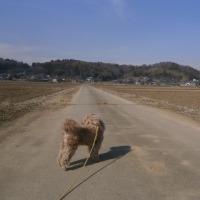 春一番のなか散歩