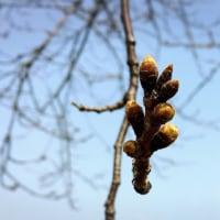 3/29(水)春!!のお散歩と、ちびちびスーパーマン参上