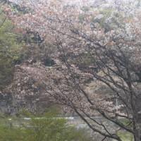 北設楽郡で咲き出した花たち(その2)