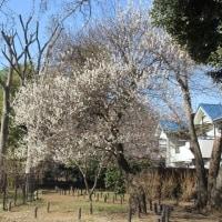 大泉 Feb-25-2017