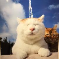猫に癒される