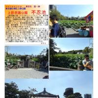 散策 「東京中心部北 316」 上野恩賜公園 不忍池