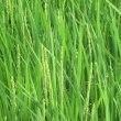 米作りの記録15