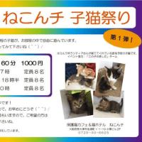 ねこんチの子猫祭り予約しました🎵