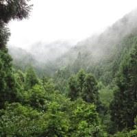 54 JR保津峡駅からつつじ尾根を経て愛宕山 2017.06.25