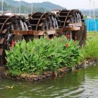 藤井養蜂場のレンゲ畑