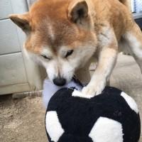 ボールと戦う