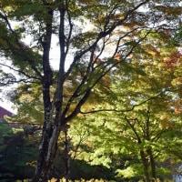 山中湖の紅葉を見に行きましたが~