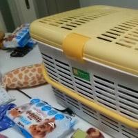ゴールデンキャンプ準備。犬のハァハァ対策。