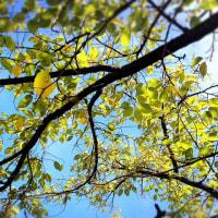 秋の始まり 始まり〜🎶