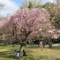 塩釜神社 花まつり