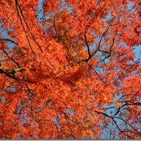 今年は龍尾寺の完全紅葉を見逃したようだ