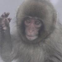 えーん(猿)かい?