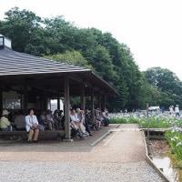 北山公園・菖蒲 2