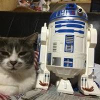 R2-D2なんだけど…
