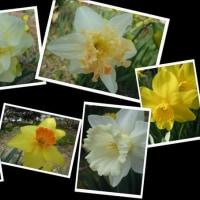 4月14日・今日の花