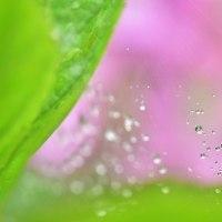 「雨の余韻」 いわき フラワーセンターにて撮影! 雨滴