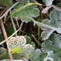 先日の霜の時 1