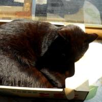 ひなたの黒猫。