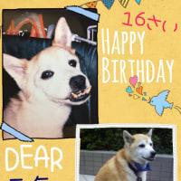 元気くん16歳のお誕生日おめでとう!