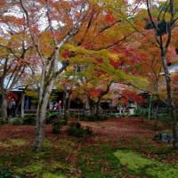京都最後の散策、詩仙堂から修学院へ