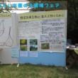 10年目の環境フェア