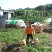 恒例の焼き芋・収穫祭