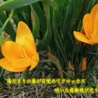 陽だまりの春