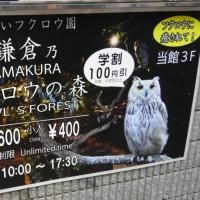 鎌倉でフクロウ&ミミズク