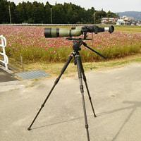 再びの眼鏡橋とコスモス&野鳥撮りの方との遭遇と定期検診