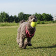 ボール遊び!