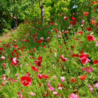 オオヤマレンゲとナツロウバイなどが咲く花フェスタ地球館