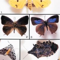 草津市エルシティ草津弐番館で採集した昆虫3種
