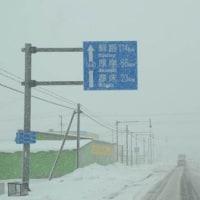 北海道野鳥旅・風連湖(3月22日)