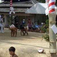 波佐見町のお祭り