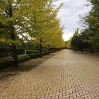 秩父市ミューズパークでお散歩