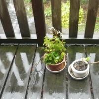梅雨半ば 本のめくりも 温くなり