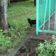 ★ そんな遠くから・・・猫ッ (ฅ`ω´ฅ) 視線・・・2