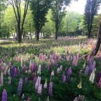 「新緑の森林公園へ」