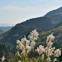 ススキがいっぱいの冬を迎える日南の山々  (Photo No.13855)