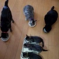 初めての全員集合でのお食事タイム