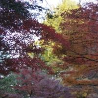 秋の行楽・Ⅰ・日光