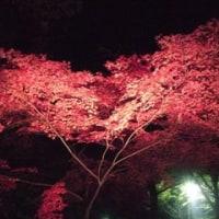 紅葉見☆ナイト