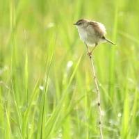 公休日で午前中 天気良さそうなので 一家でやまなみへ 鳥見に行ってきました