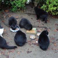 公園猫ちゃん 1120