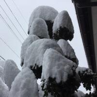 大雪警報は解除されました