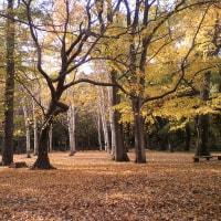 晩秋の円山公園