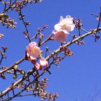 春到来?!