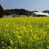 JRウォーキング:「満喫!!黄金のじゅうたん「なの花まつり」と古賀市内ぶらり」